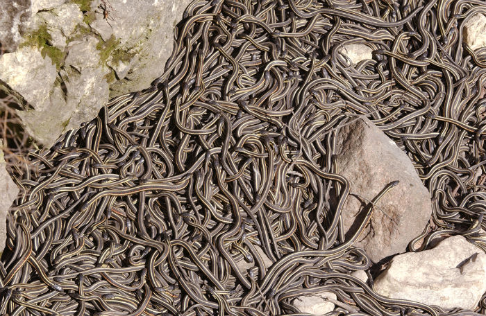 The Narcisse snake pits.